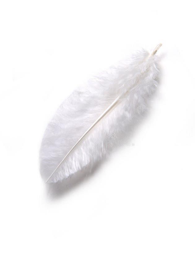 羽毛白色 图库摄影