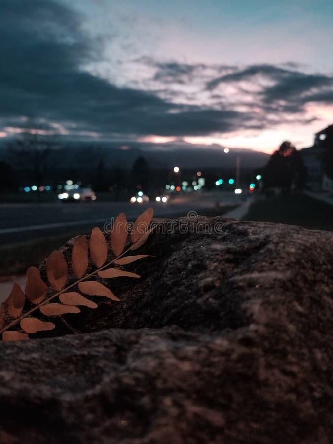 羽毛的叶子 库存照片