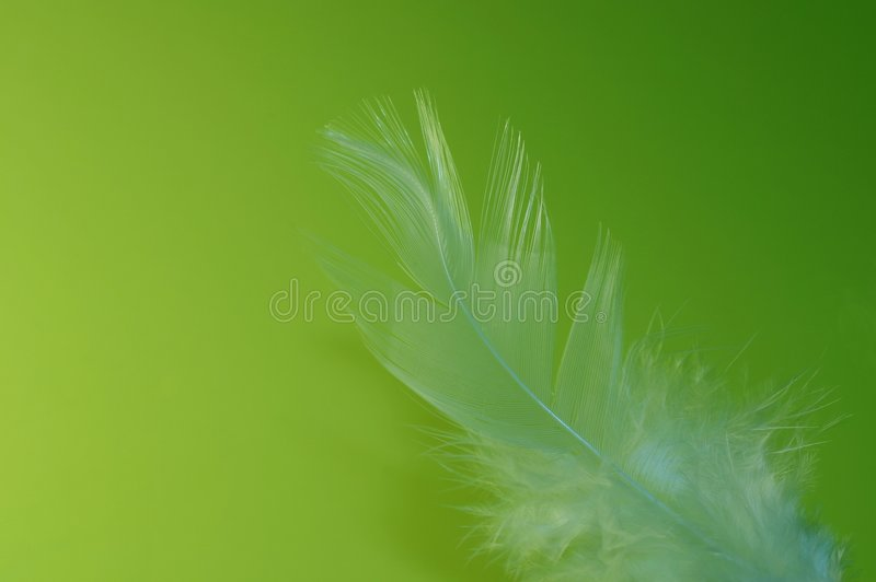 羽毛石灰 库存照片