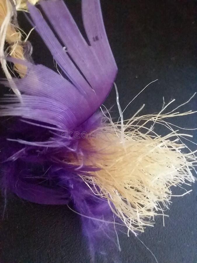 羽毛紫色 库存照片