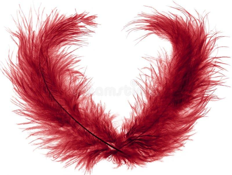 羽毛红色二 库存图片