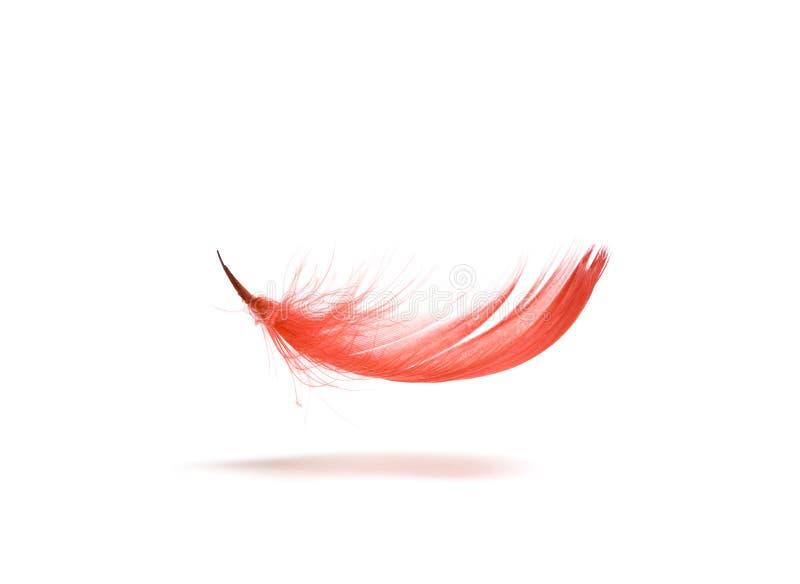 羽毛红色 免版税图库摄影