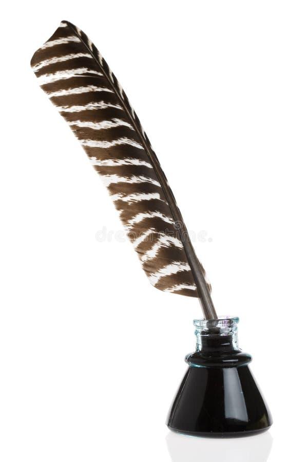 羽毛纤管 免版税库存照片