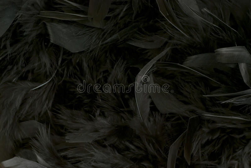 黑羽毛 免版税库存照片