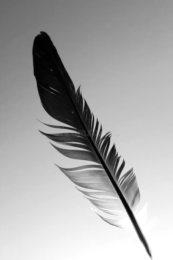羽毛 库存图片