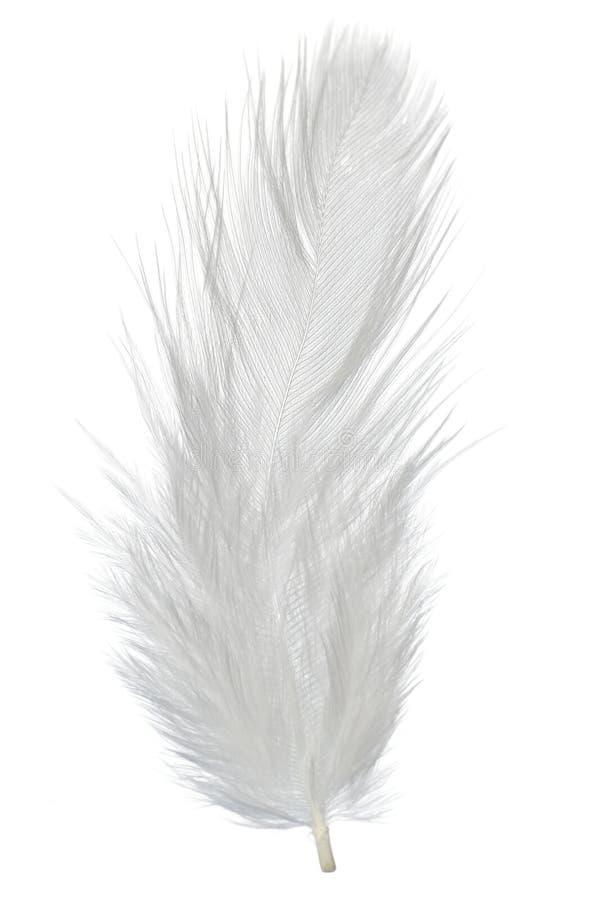 羽毛 免版税图库摄影
