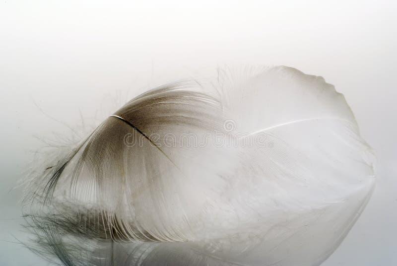 羽毛 免版税库存图片