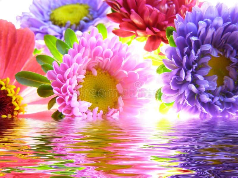 翠菊束起被反射的水 图库摄影