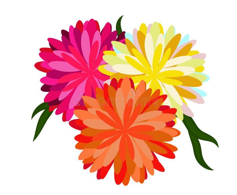 翠菊花束 库存照片