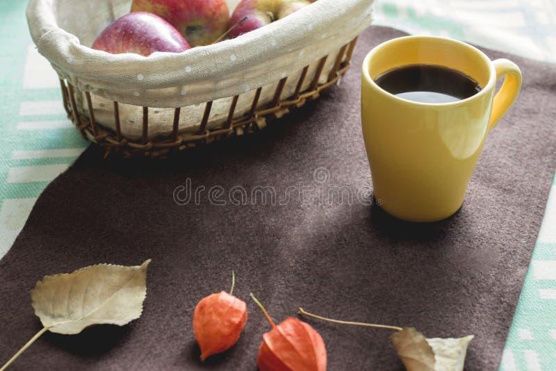 翠菊许多秋天的紫红色心情粉红色 免版税库存照片