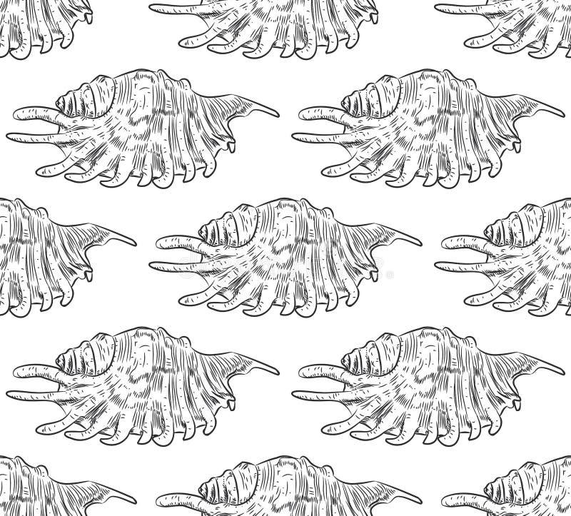 翼角螺属,共同的名字蜘蛛巧克力精炼机,是大蜗牛的种类,在家庭贝壳的一个海洋腹足动物的软体动物, 皇族释放例证