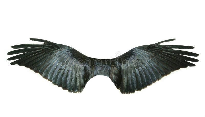翼 图库摄影