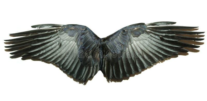 翼 免版税库存图片