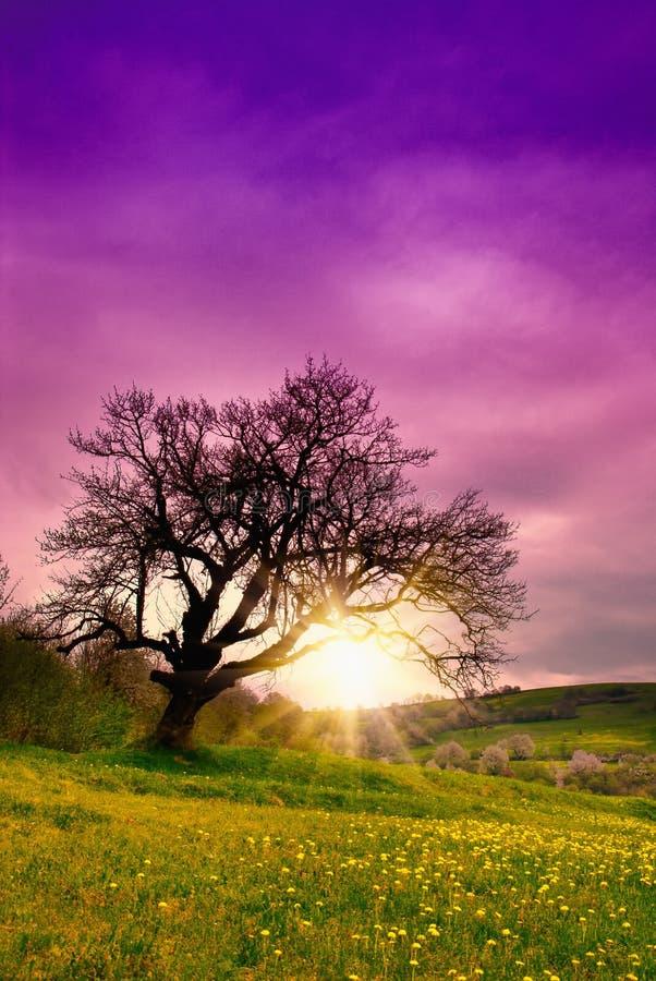老一个结构树 免版税图库摄影