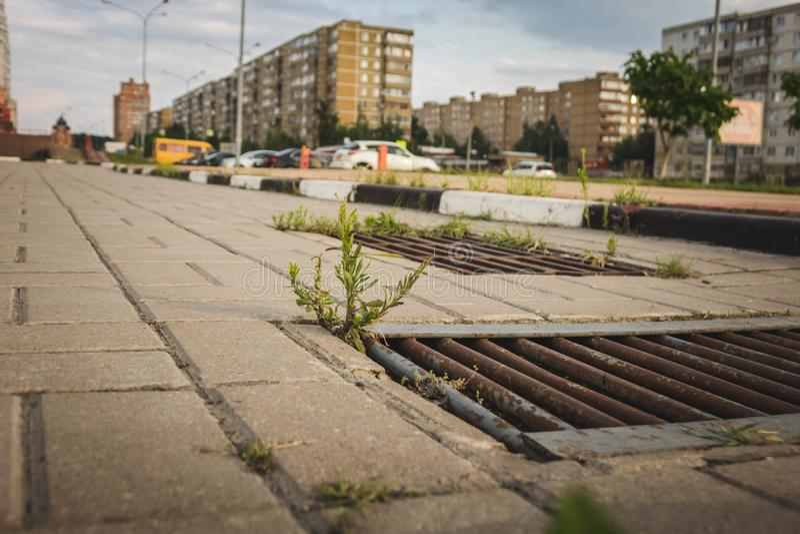 老下水道花格发芽了在灰色铺路板的草 库存图片