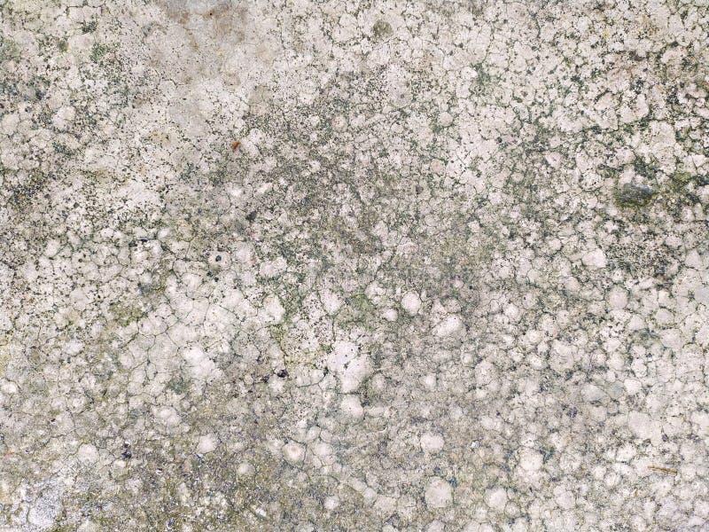 老与绿色地衣的裂缝灰色水泥地板 免版税库存照片