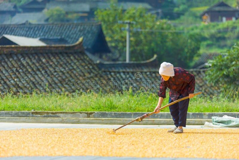 老中国女性农夫干燥玉米村庄 免版税库存照片