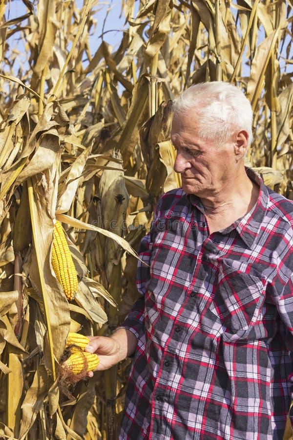 老人用玉米在他的手上 免版税库存照片
