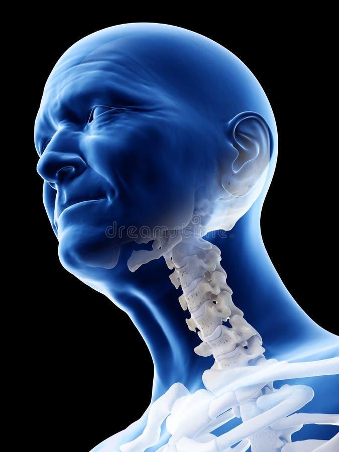 老供以人员子宫颈脊椎 库存例证