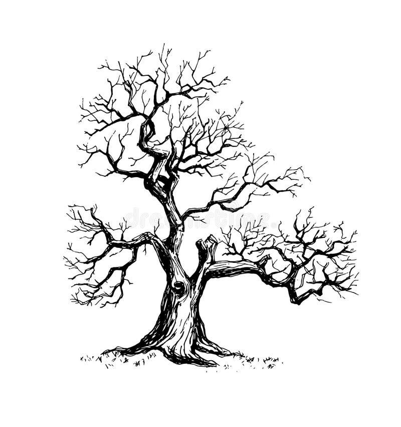 老偏僻的树在冬天 库存照片