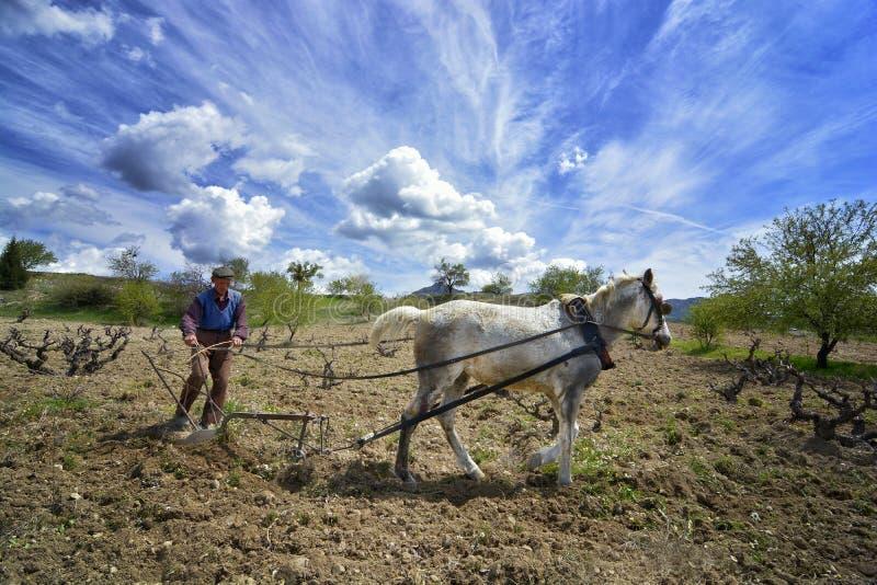 老农夫耕种马 免版税库存图片