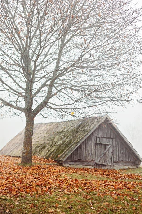 老农村地窖在秃头树下 库存图片