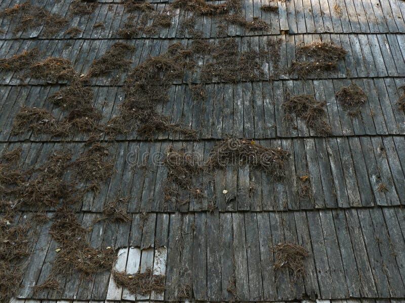老农舍屋顶 库存图片