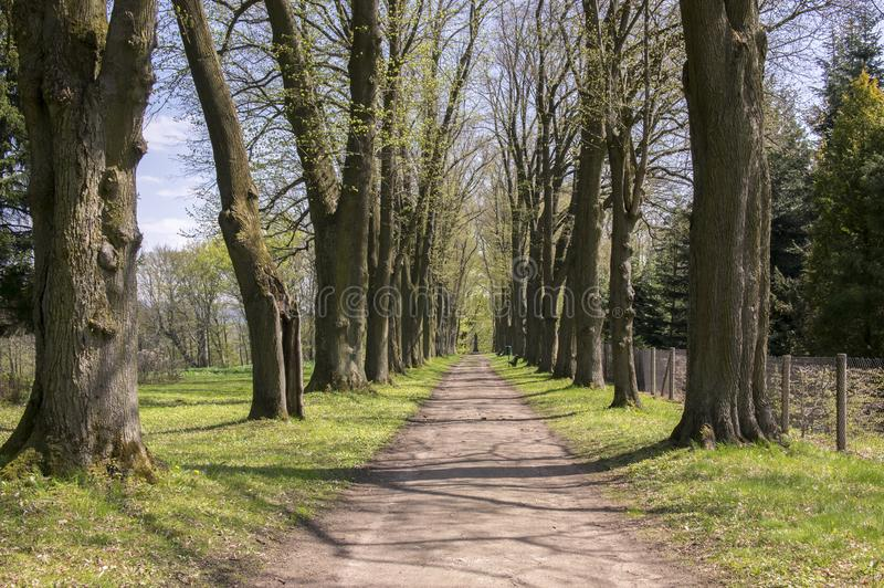 老历史的栗子胡同在春季期间的Chotebor,在两行,浪漫场面的树 库存图片