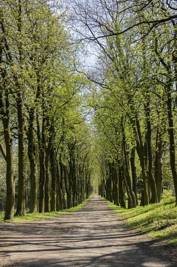 老历史的栗子胡同在春季期间的Chotebor,在两行,浪漫场面的树 图库摄影