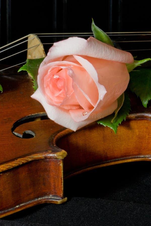 老变苍白玫瑰色小提琴 免版税库存照片
