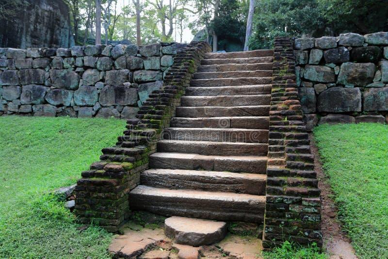 老台阶在密林 库存照片