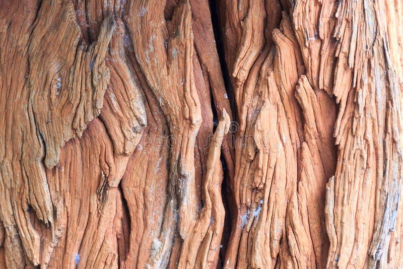 老吠声树纹理 图库摄影