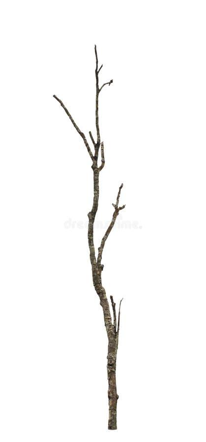 老和死的树。 库存图片