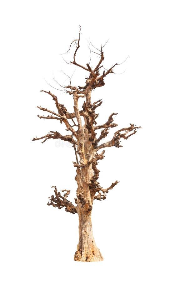 老和死的树 免版税图库摄影
