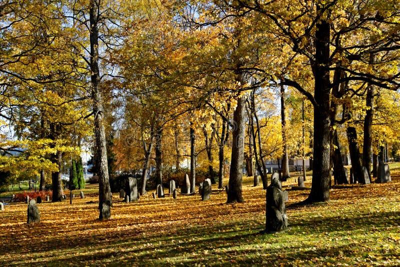 老坟园和高大的树木在阴影和光 免版税库存图片