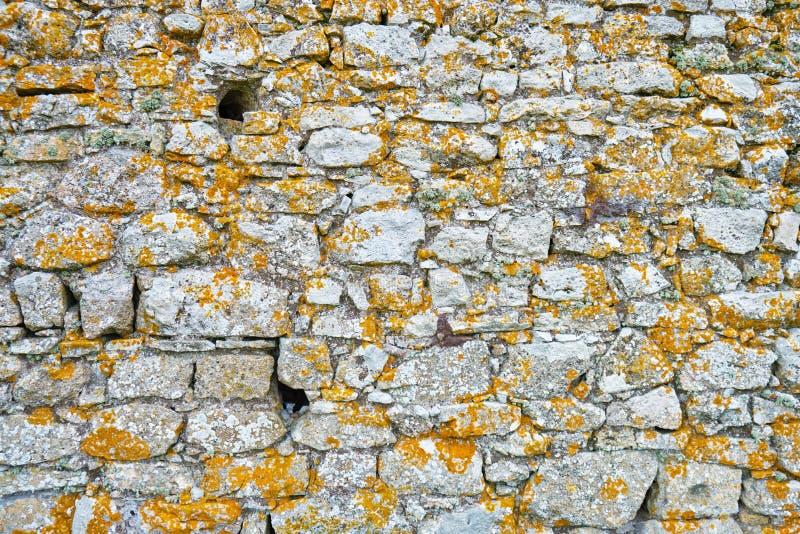 老城堡墙壁纹理有黑暗的黄色/棕色用于防御的地衣和两三个孔的在中间年龄 免版税图库摄影