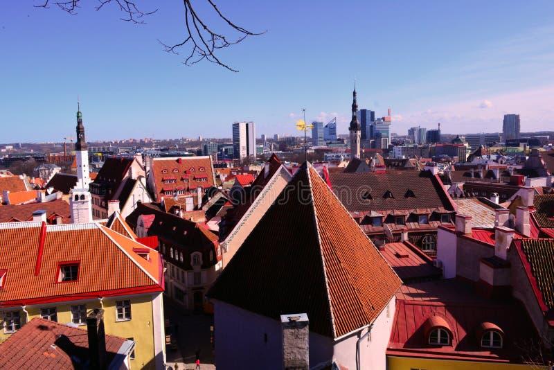 老塔林和它的老红色屋顶和一个新的城市,全景,爱沙尼亚 免版税库存图片