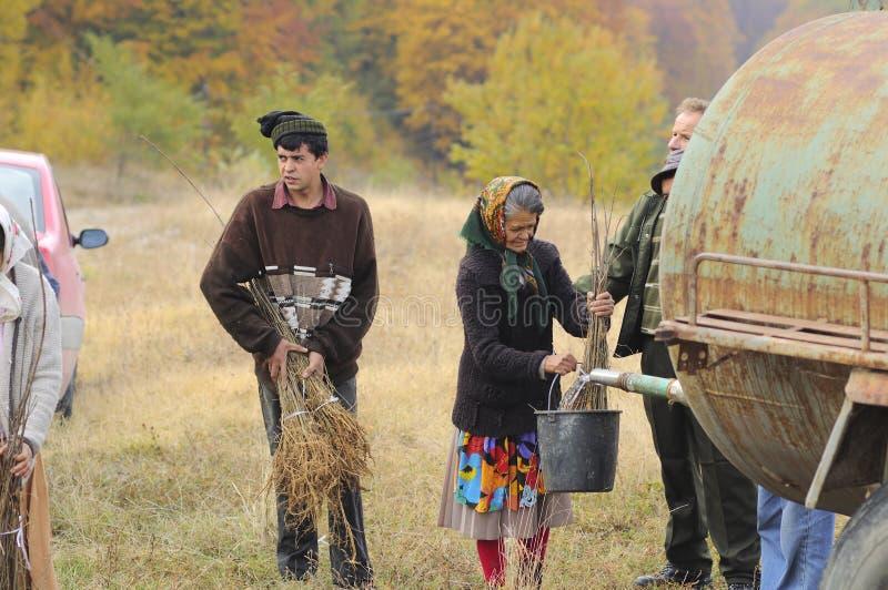 老妇人浇灌的树苗 库存图片