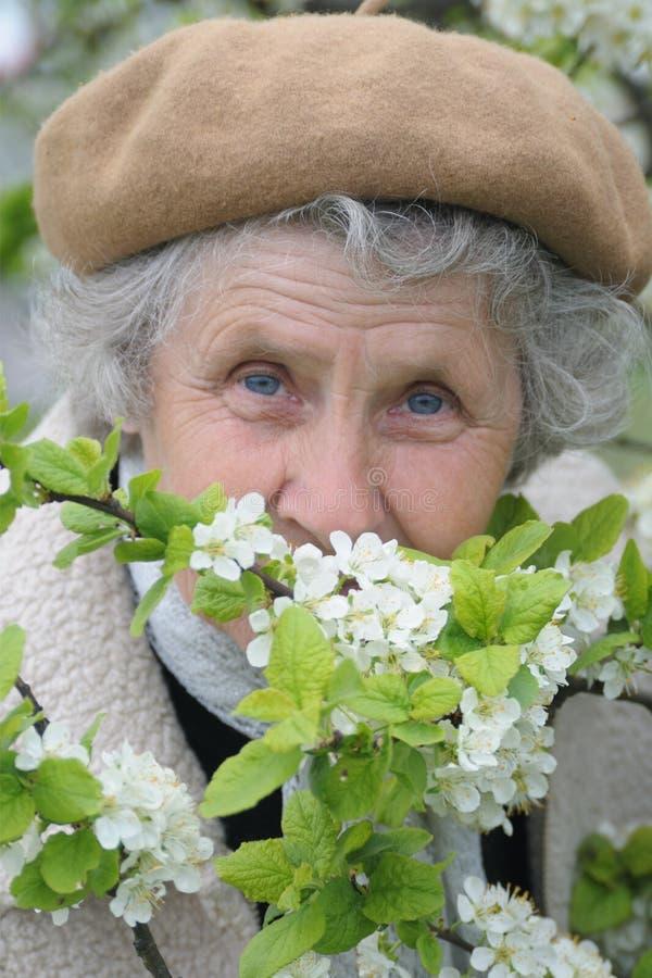 老婆婆嗅到白花 库存图片