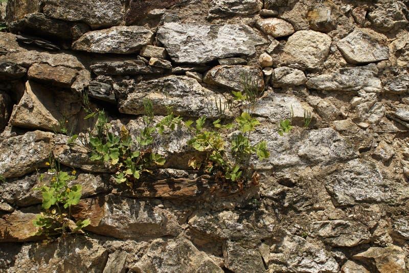 老岩石墙壁 库存照片