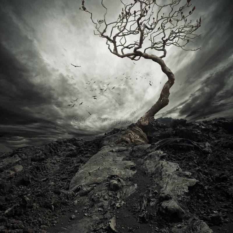 老干燥结构树 免版税库存照片