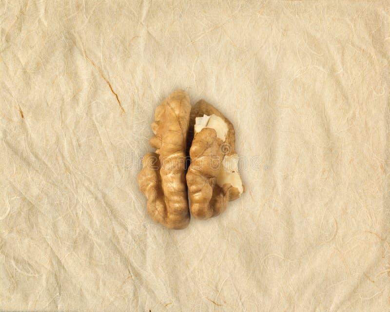 老年痴呆-阿耳茨海默氏的概念-脑子型核桃仁 库存图片