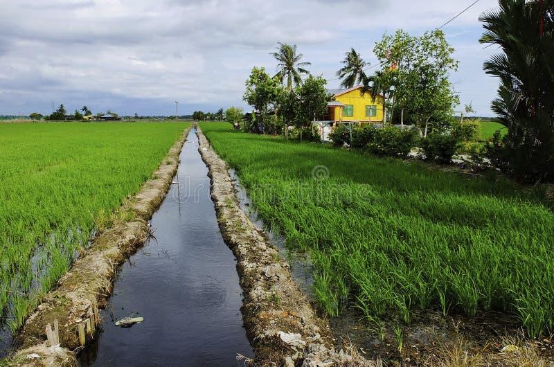 老房子和稻田 免版税图库摄影