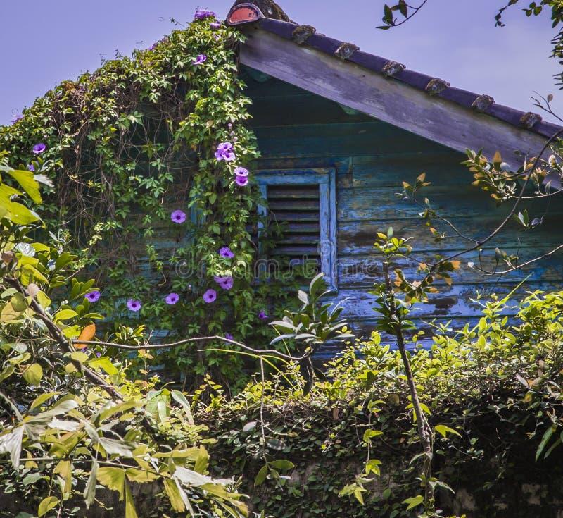 老房子在植物庭院里 库存图片