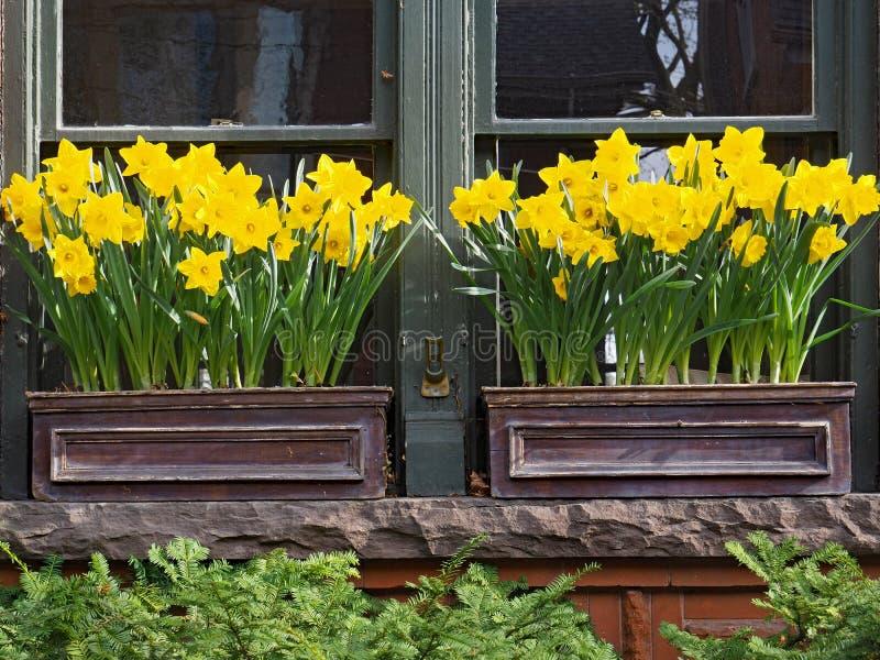 老房子窗口有生长在箱子的黄水仙的 图库摄影