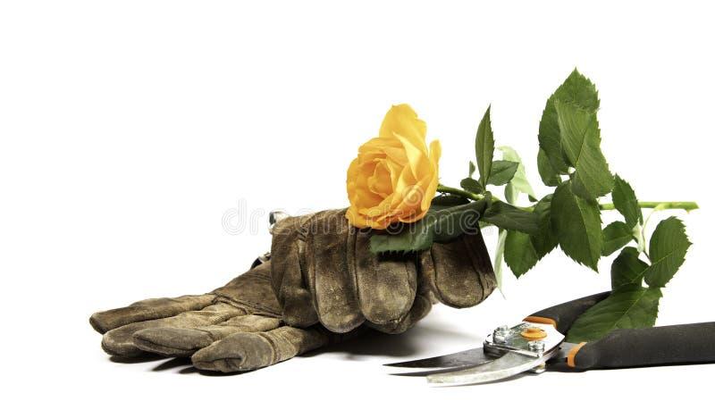 老手套、飞剪机和一朵黄色玫瑰在白色背景 库存图片