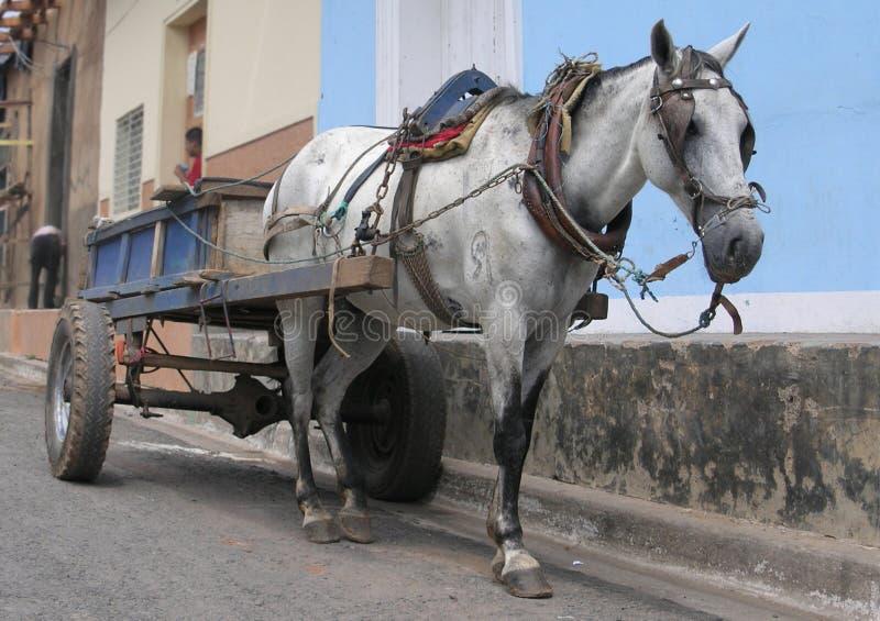 老拉货车的马在尼加拉瓜 免版税库存照片