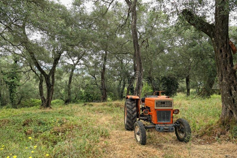老拖拉机在科孚岛海岛的希腊一个橄榄树种植园 库存照片