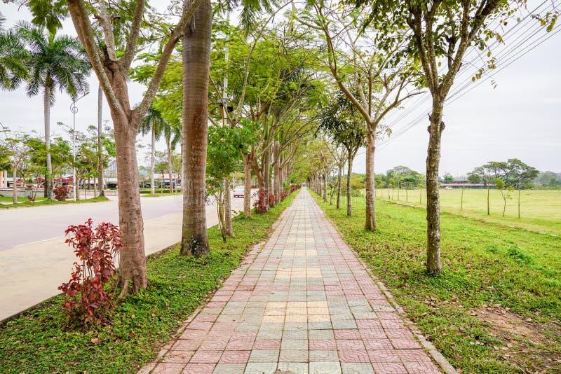 老挝砖与树的步行方式在此外一直 图库摄影