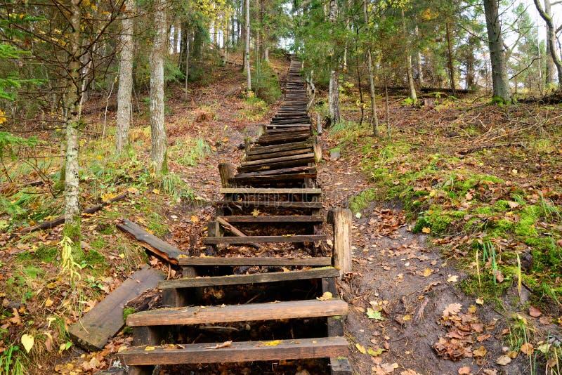 老木台阶在森林里 库存图片